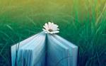 草原の中の本の画像.jpg